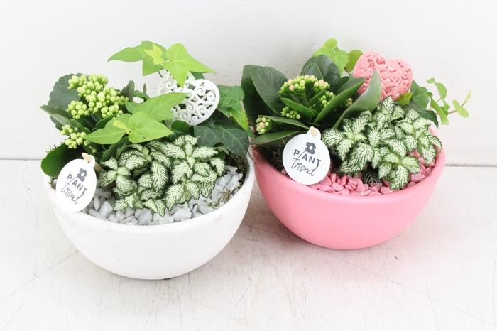 <h4>arr. PL - Ker. bowl roze/wit</h4>