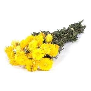 Helichrysum yellow nat. Craft