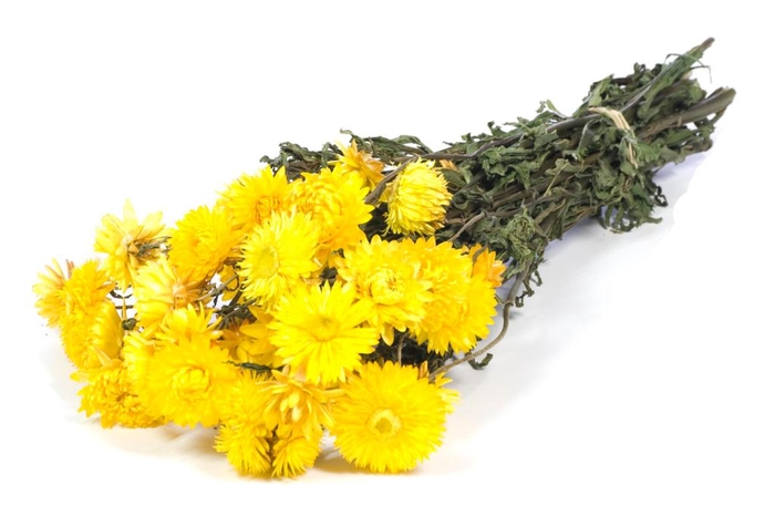 Helichrysum yellow nat. Craft