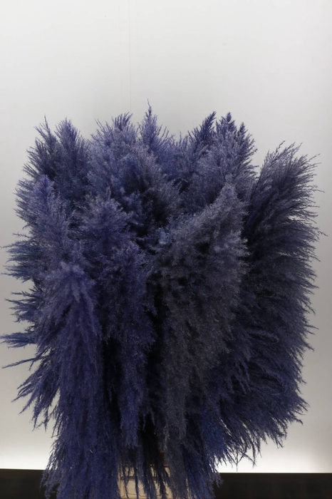 <h4>Cortaderia Lavendel Droog</h4>