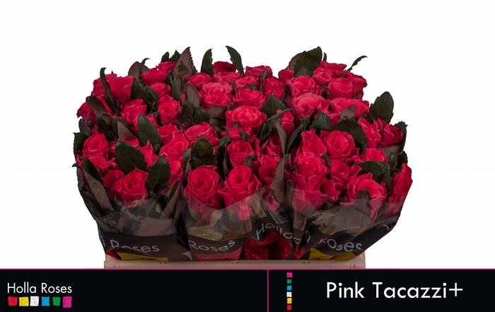 <h4>Rosa grootbloemig Pink Tacazzi+</h4>