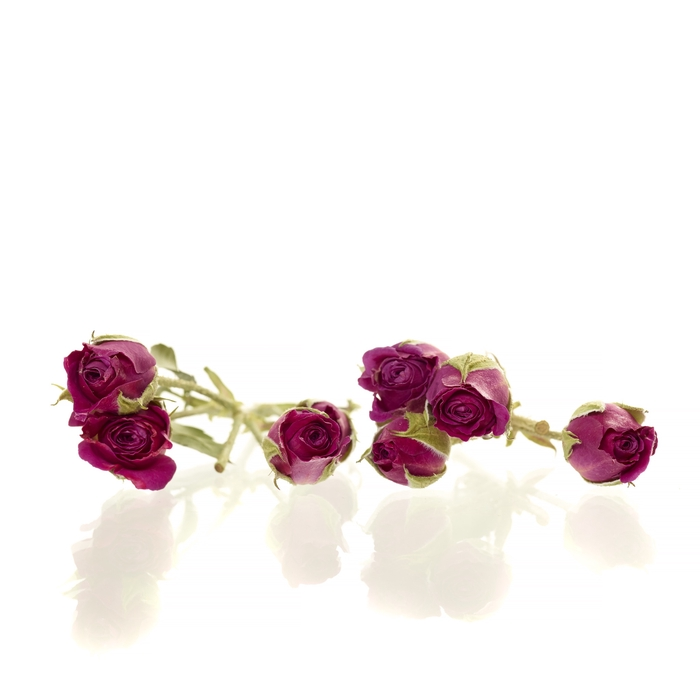 <h4>Sprayroses 20pc dark pink</h4>