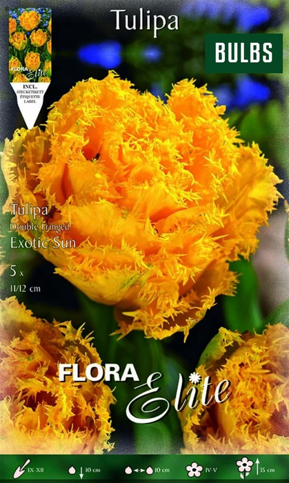 <h4>Z Tulipa Fringed Exotic Sun</h4>