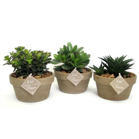 <h4>Succulent 12 Cm In Bruine Schaal Met Mijnsplit En</h4>