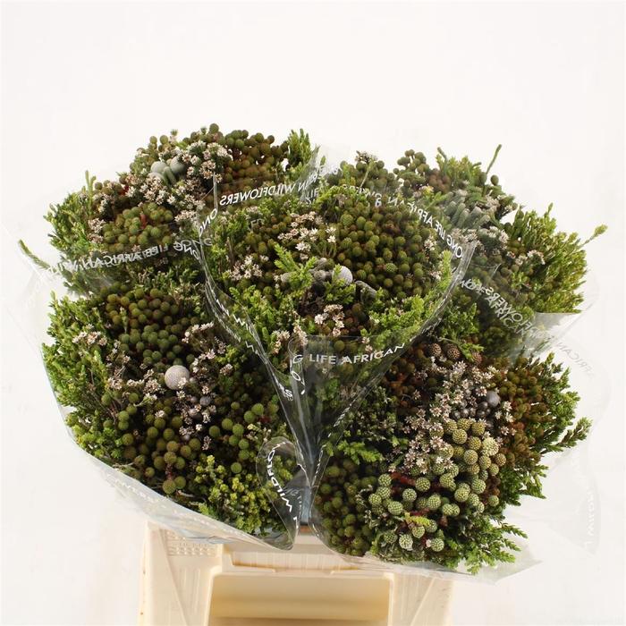 <h4>Bouquet Cape Mix</h4>