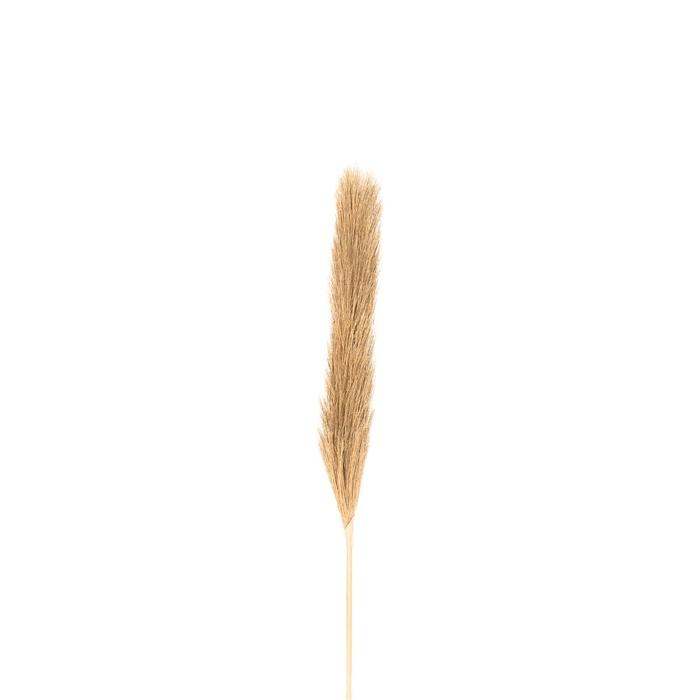 <h4>Silk Plum grass 104cm</h4>