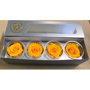 Rose Sunny Yellow Super(4)
