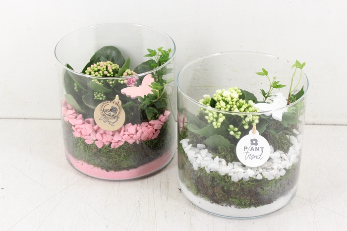 <h4>arr. PL - Cilinder breed - roze/wit</h4>