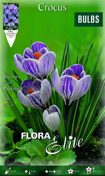 <h4>Z Crocus Vernus Pickwick</h4>