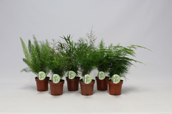 <h4>Asparagus gemengd</h4>