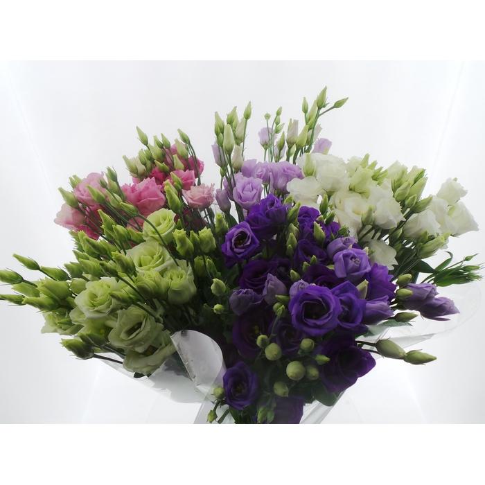 <h4>Bouquet Mono Eustoma x5 mix 60cm</h4>