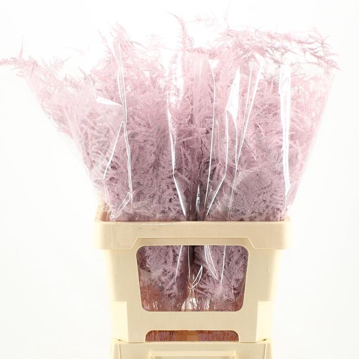 <h4>65cm Extra V. Light pink</h4>