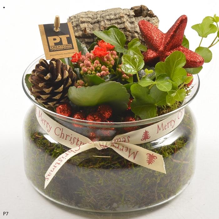 Planten  ..in schaal L%