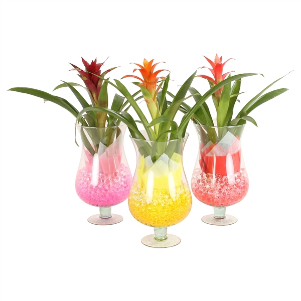 <h4>Cognac glass Large 17cm with arr Guzmania and gelpearls</h4>