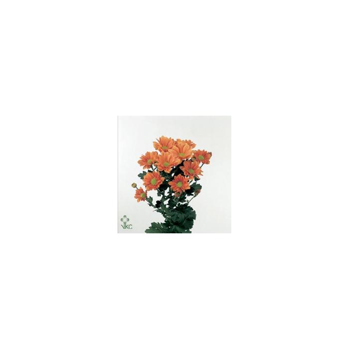 <h4>Chr T Grand Orange</h4>