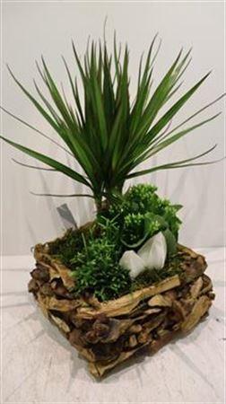 <h4>2780 Driftwood Plants!!</h4>