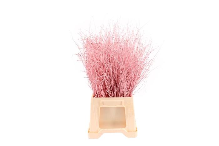 Berk ( Birch ) Light Pink