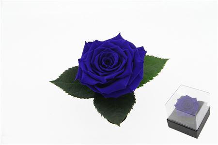 <h4>Pr 9.3 Giftbox Blu-03 Gb3</h4>