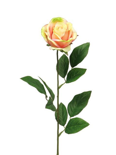 <h4>DF885057700 - Rosa susan m salmon 70cm</h4>