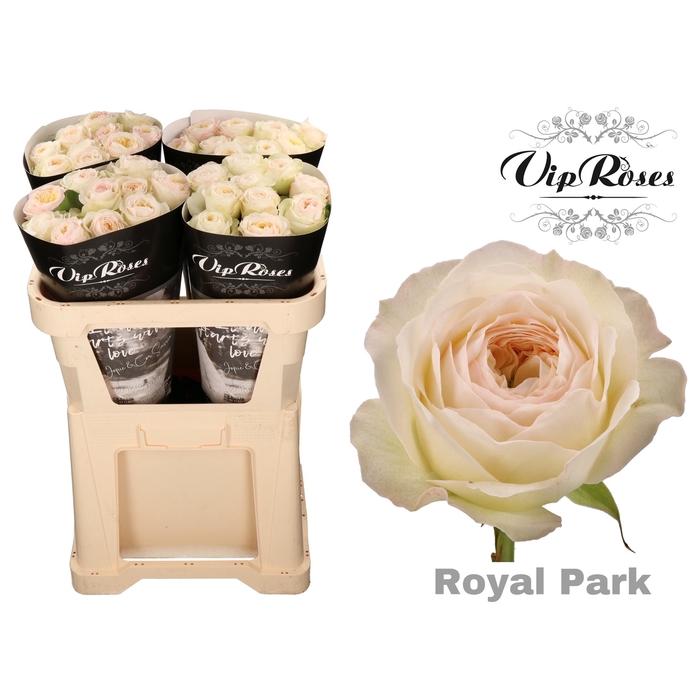 <h4>R GR ROYAL PARK</h4>