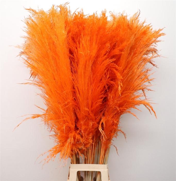 <h4>Corta Dried Orange 120cm</h4>