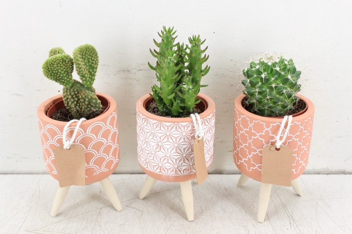<h4>arr. UB - Cactus   Ker. pootjes kl.</h4>