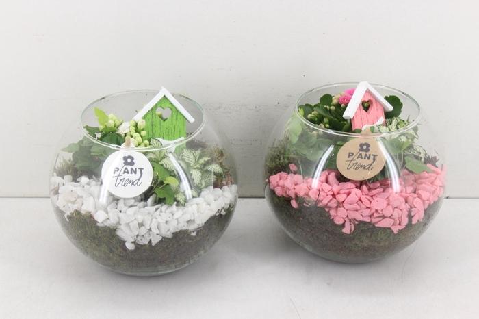 <h4>arr. PL - Glas bol - roze/wit</h4>