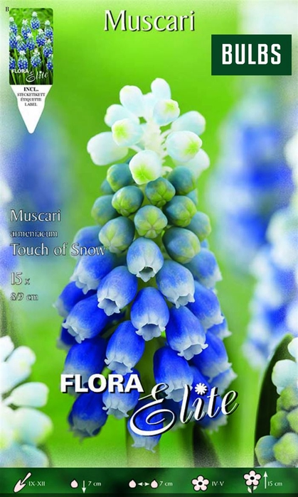 <h4>Z Muscari Touch Of Snow</h4>