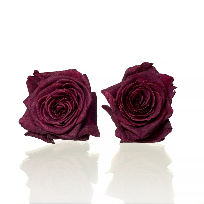 <h4>Rose Red Naomi d.red 4,5-5cm</h4>