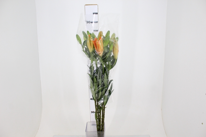<h4>LIRIO HONESTY 090 CM HA 2/3 FLS</h4>