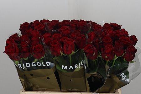 <h4>R Gr Red Naomi</h4>
