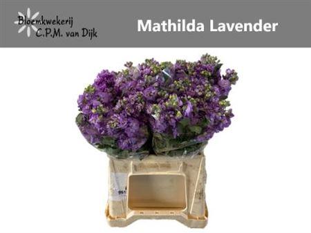 <h4>MATTH MATHILDA LAVEN</h4>