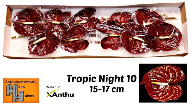 <h4>ANTH A TROPIC NIGHT</h4>