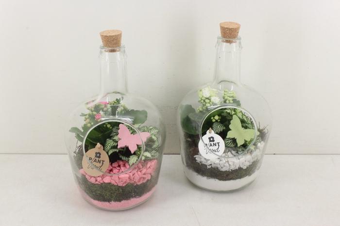 <h4>arr. PL - Glas fles kurk - roze/wit</h4>
