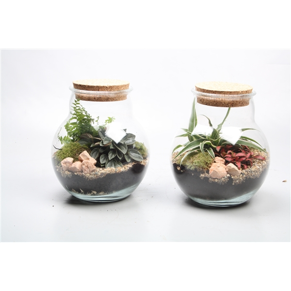 <h4>Terrarium arrangement</h4>