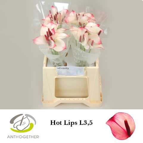 <h4>ANTH PR AMA HOT LIPS 40 L3,5.</h4>