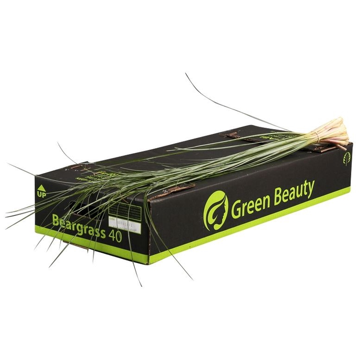<h4>Beregras Green Beauty</h4>