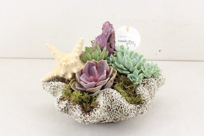 <h4>arr.. Succulent VL5010 - Keramiek natuur</h4>