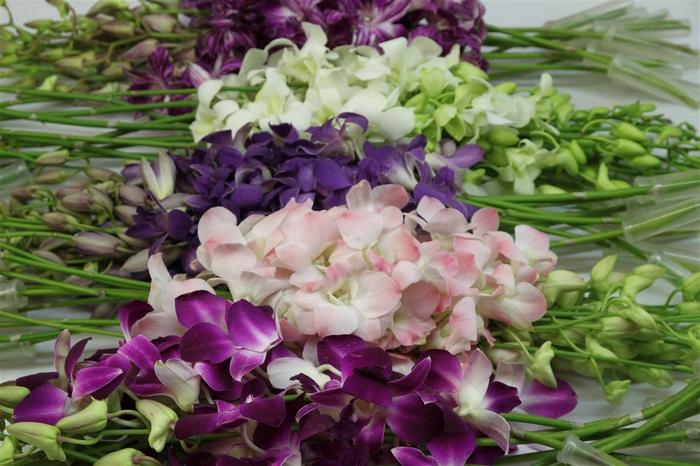 <h4>Dendrobium Special Mix</h4>