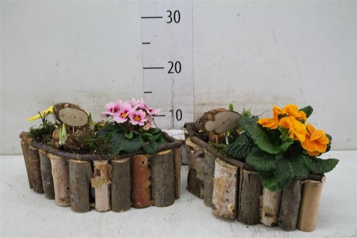 <h4>Arr Tuinplanten In Houten Bootvorm</h4>