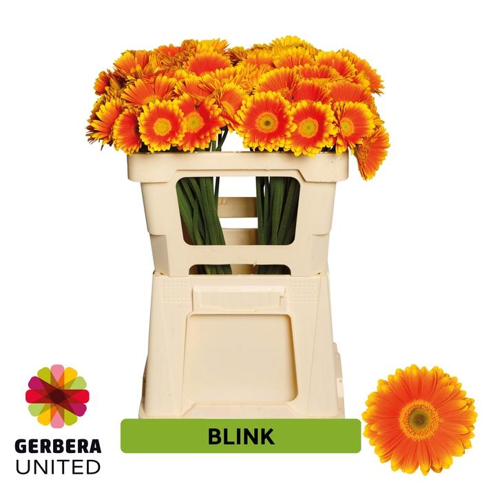 <h4>GE MI Blink</h4>