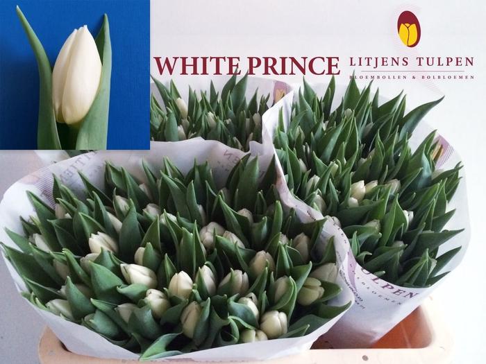 <h4>TU EN WHITE PRINCE</h4>