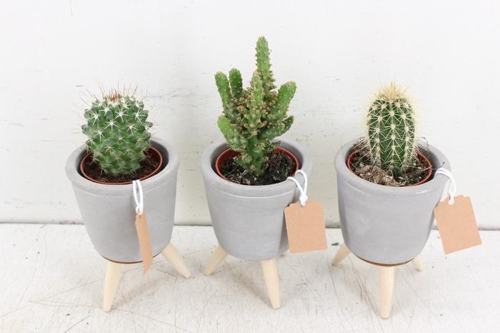 <h4>arr. UB - Ker. potje pootjes S cactus grijs</h4>