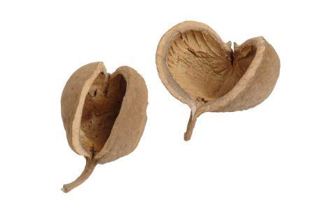 <h4>Basic Buddha Nuts</h4>