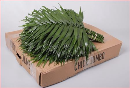 <h4>Dec Chico Jumbo</h4>