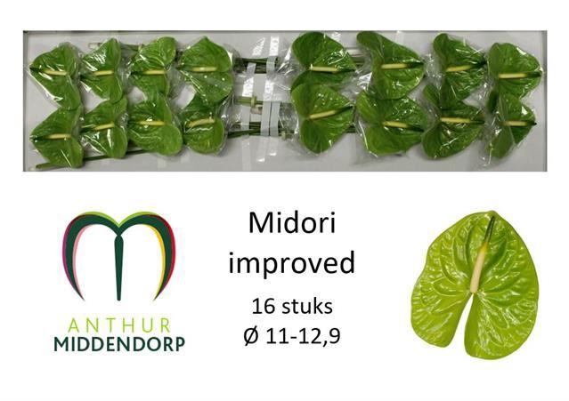 <h4>Anth Midori Improved</h4>