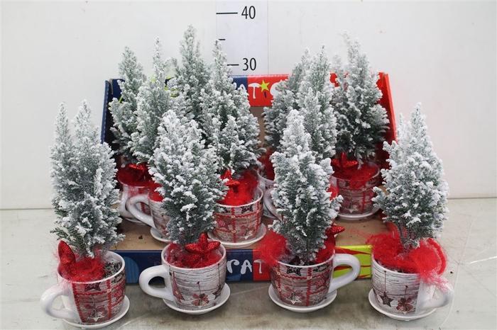 <h4>Kerstb Versierd Snow In Kerst Kop En Schotel</h4>