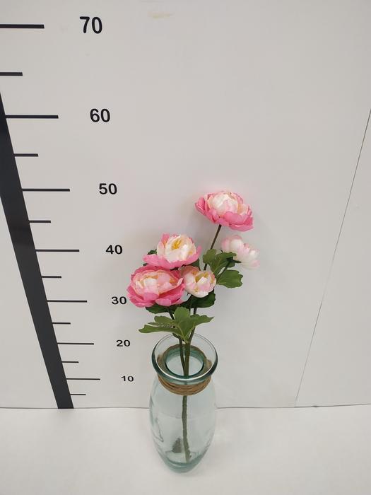 <h4>Haste peonias rosas</h4>