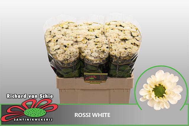 <h4>CHR SAN ROSSI WHITE</h4>