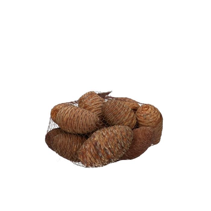<h4>Dried articles Cedar x12</h4>